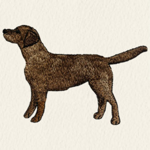Labrador - barna szín
