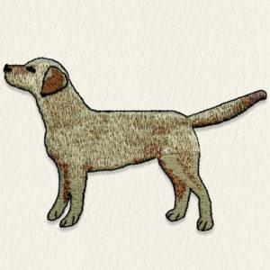 Labrador - pezsgő szín