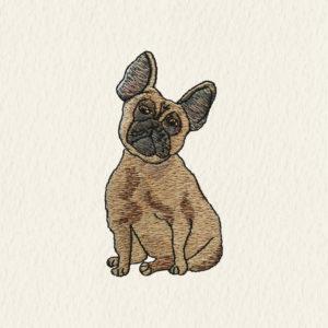 Francia Bulldog - Pezsgő